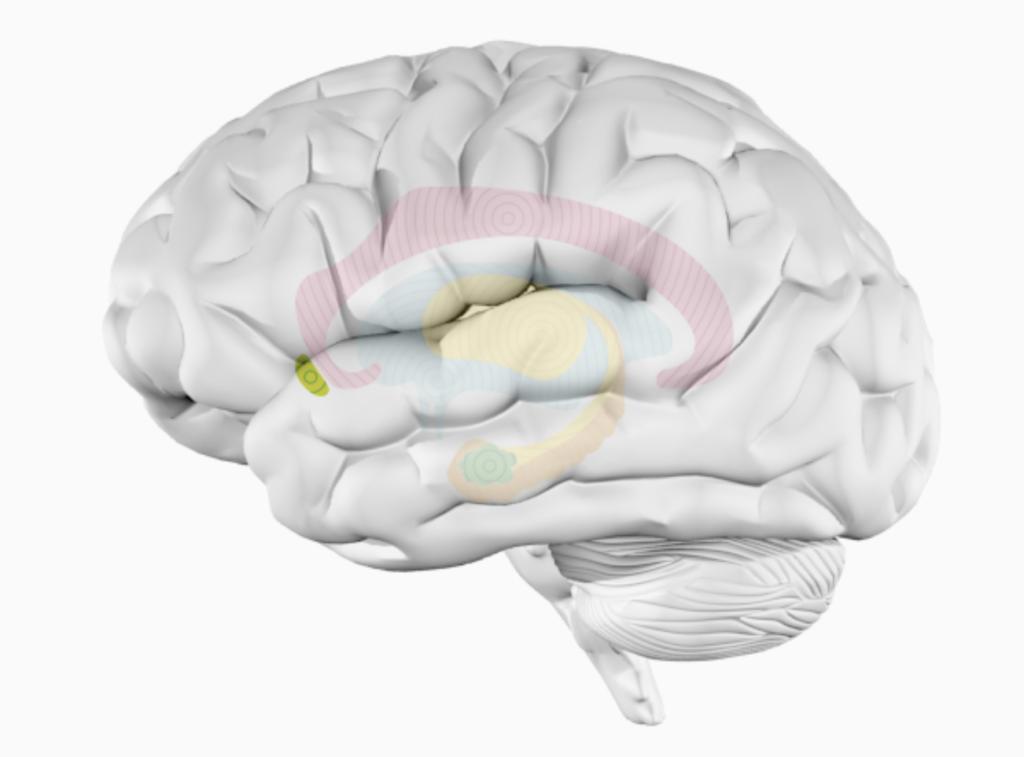 Музыка высвобождает дофамин — таковы результаты исследований