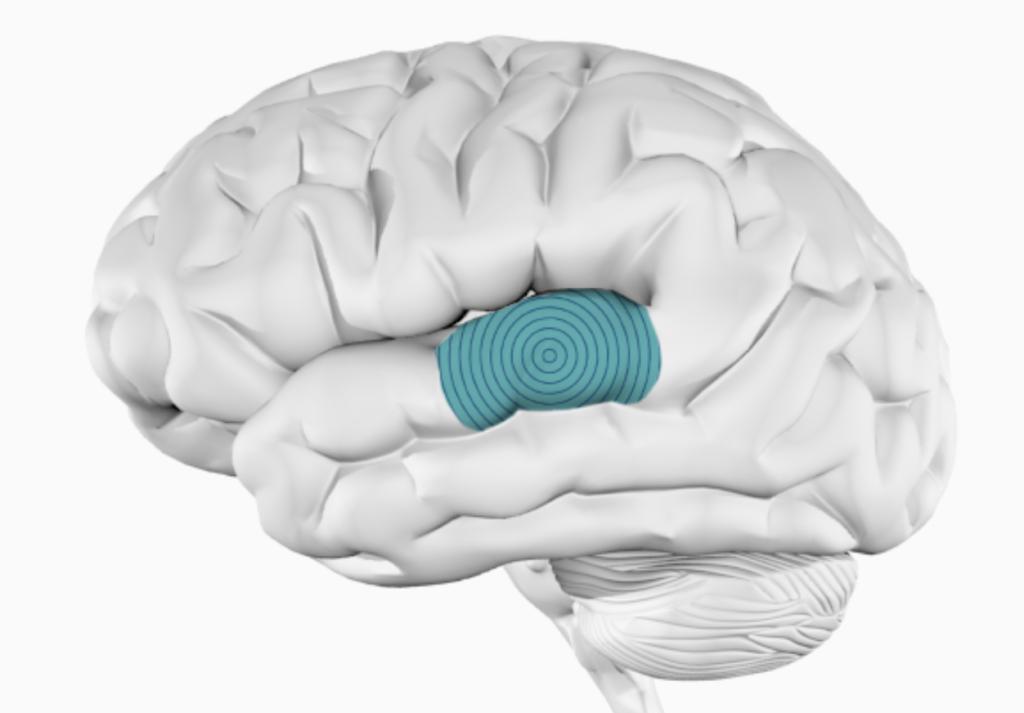 Центр Вернике в головном мозге - разделяет звук на речь и музыку