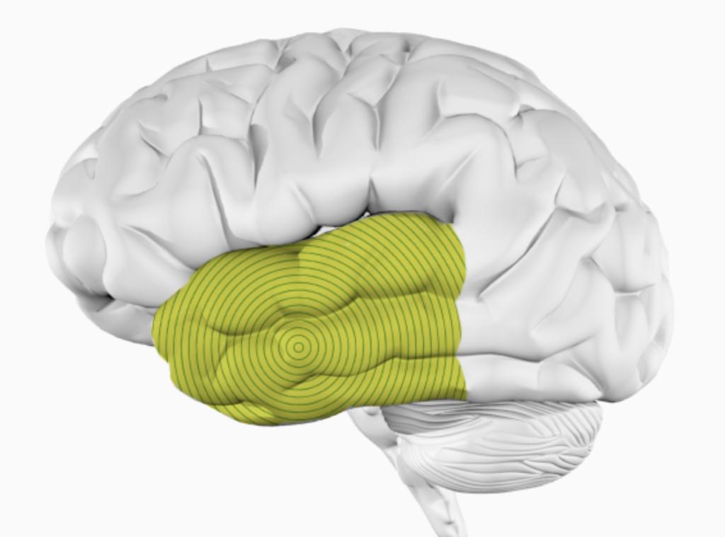 Как мозг разделяет речь и музыку?