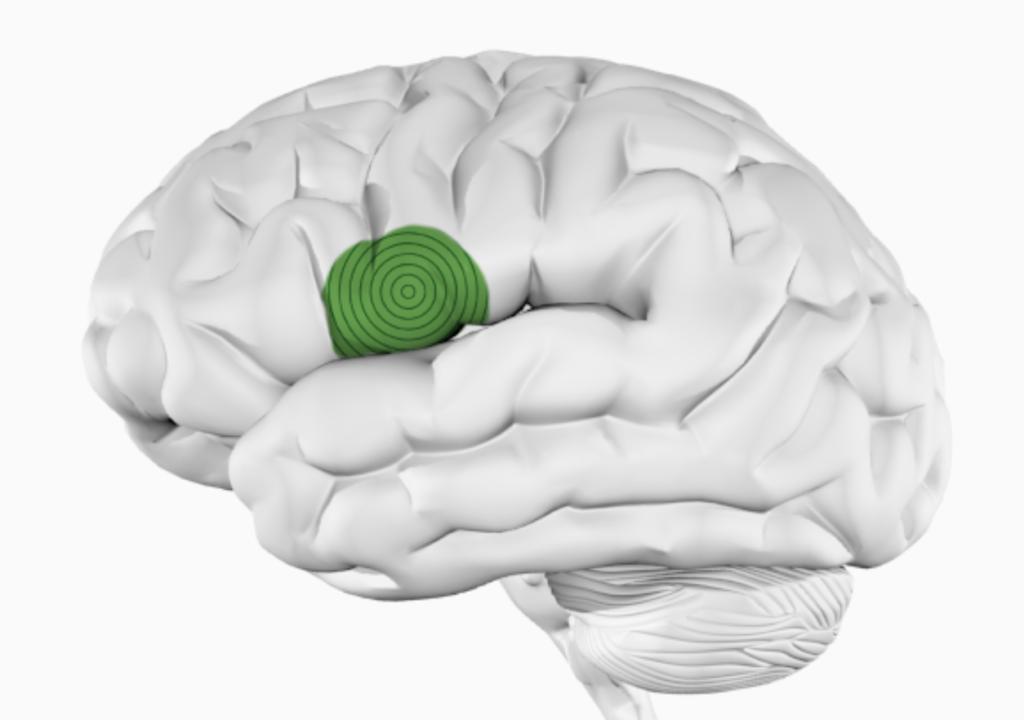 Музыкальные навыки = навыки общения — влияние музыки на организм человека