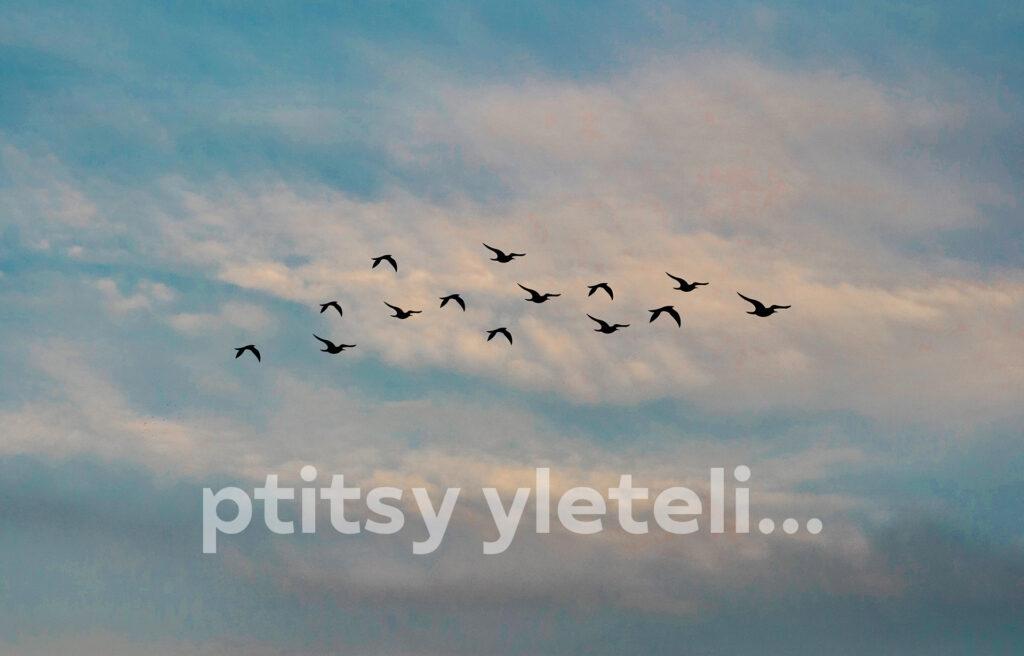 Мир сошел с ума, птицы улетели — песня Джони